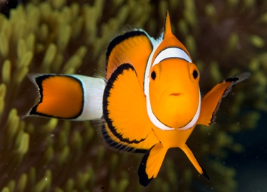 Dive in Borneo and meet NEMO