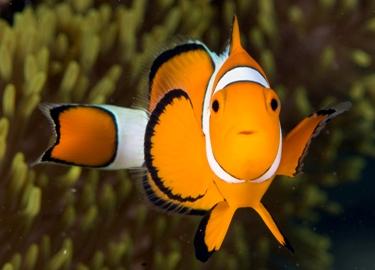 Dive in Borneo and meet NEMO