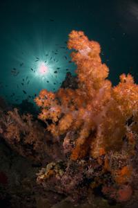 Kumai Reef- a secret of the Celebes Sea