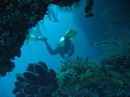 Diving along the walls of Sipadan