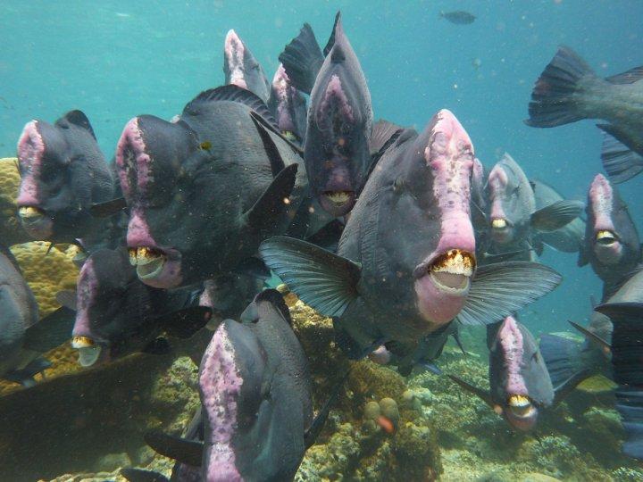 Sipadan Scuba Padi 5 Star Idc Diving Trips Semporna Borneo