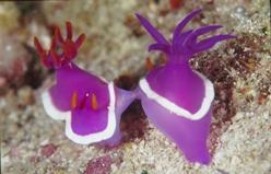Dive Pandanan