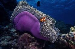 Sibuan Island - an underwater paradise!