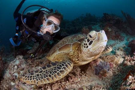 Kumai Reef- Pom Pom Island